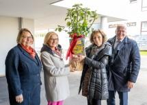 Bürgermeisterin Karin Baier, Landeshauptfrau Johanna Mikl-Leitner und Direktorin Regina Pfeil mit einem Apfelbaum, LH-Stellvertreter Franz Schnabl (v.l.n.r.)
