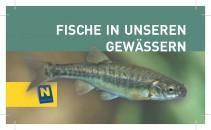 Fische in unseren Gewässern