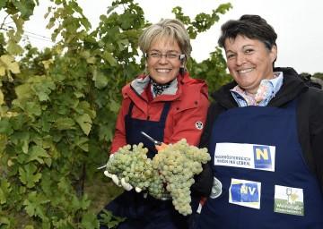 Weinlesen für den guten Zweck im Weinviertel: Tourismus-Landesrätin Dr. Petra Bohuslav und Renate Winter, Obfrau der Weinstraße Weinviertel. (v.l.n.r.)